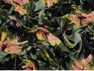 Printed Viscose Jersey Fabric - Colour Splash Floral